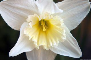 Kwiatek